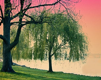 Nature Photography Weeping Willow Tree - dc Landscape Image photography 5x7 8x10 8x12 11x14 theartisangroup
