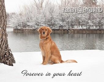 Dog sympathy - Loss of pet - set of 4 blank cards