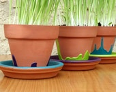 Digestive Help Cat Grass Painted Pot and Kit