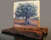 Holy Land Ancient olive tree. A small piece 4 a large peace from ISRAEL