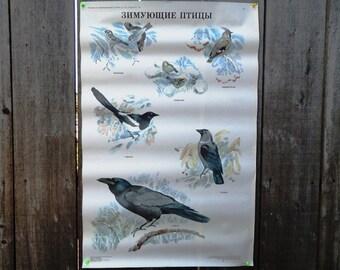 Large Birds School Poster 1991
