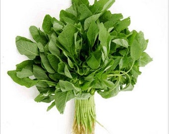 how to get spinach seeds ark