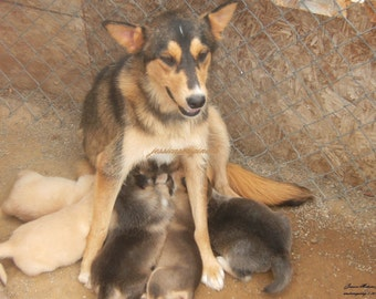 undermywing Fundraiser Photo of a Mama Dog and Her Puppies at Pauline's Puppy Rescue