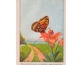 Vintage Butterfly Print, 1926 Insect Art Illustration, Wall Decor, Double Sided, Silver Spot Fritillary and  Regal Fritillary