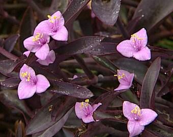 20 Live Assorted Plants Lot