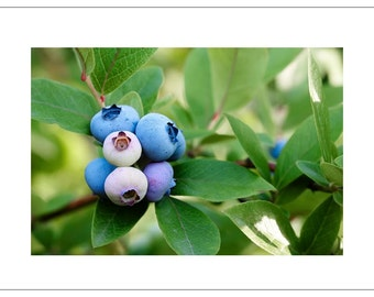 Blueberries - Good Enough to Eat