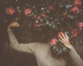 Camellia 5 x 7 Photo Print