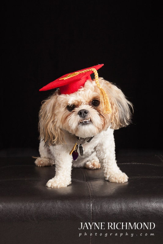 Dog Graduation Cap Graduation Hat Costume