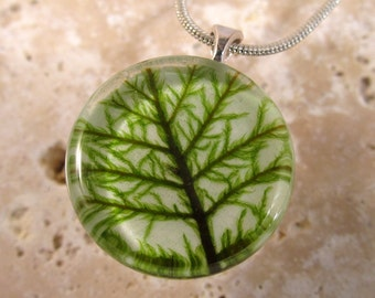 Stair Step Moss (Hylocomium splendens) Circle Glass Necklace, bryophyte, moss jewelry, woodland jewellery, nature, silver plated chain