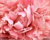 Peony 5, Fine Art Photography, Flower Photography, Floral Photography, Nature Photography