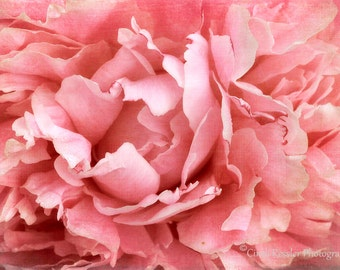 Peony 5, Photography, Floral Photography, Nature Photography, Flower Photography, Fine Art Photography, Garden Photography