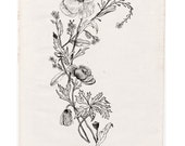 Wildflowers tattoo design art instant download jpg