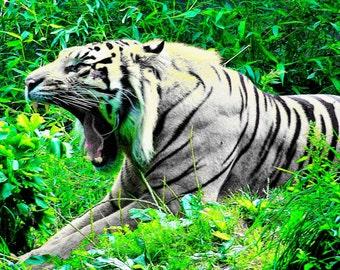 Roar style 2