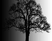 Big Black Tree. original and affordable art.*NOW REDUCED  BY 50%* - PeterTheArtist