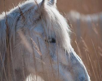 White horse photo, summer, horse photography, equestrian art, golden sun, yellow, country decor