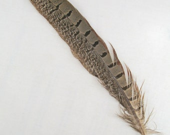 "Ringneck Pheasant Feathers, 5-10"" per 6"