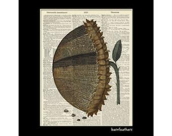 Sunflower - Vintage Dictionary Art Print - Gardening - Dictionary Page - Book Art Print  - Home Decor No. P184