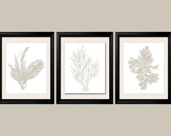 Revere Pewter Wall Art, Gray Sea Coral Print Set of Three, Coral Wall Art, Coral Print, Gray Wall Art, Gray Coral Prints, Custom Colors