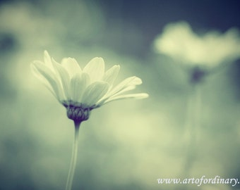 "Photographic Print: Ursinia In The Flower Park 12"" x 8""."