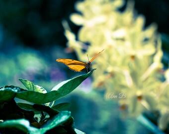 Nature Photography, Butterfly prints Botanical art Wall Decor dreamy pretty feminine Garden Butterflies Macro nursery art spring photography