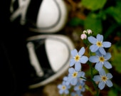 Fine Art Photography, Forget Me Not, Shoes, Flowers, Whimsical, Blue, fPOE, Black Converse