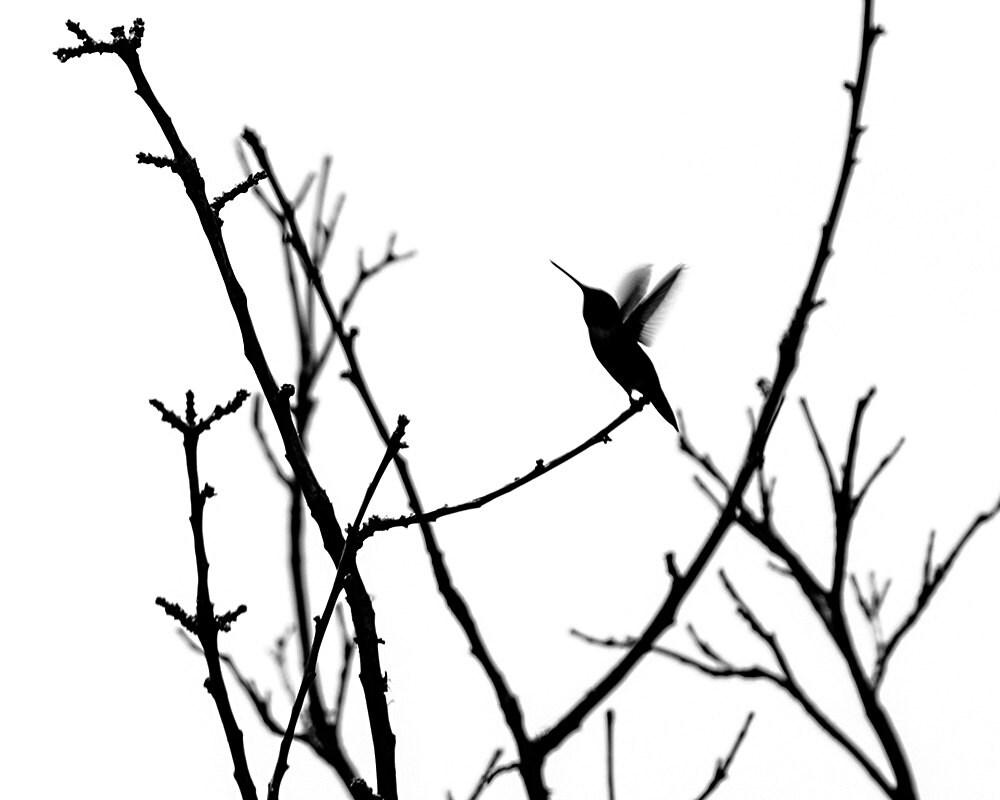 Minimalist Bird Drawing