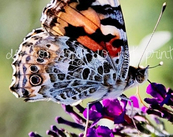 Butterfly decor, butterfly picture, Butterfly print, art print, 5x7 photograph, fineart photography, colorful decor, nature photography