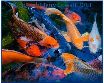 Popular items for photography sale on etsy for Colorful pond fish