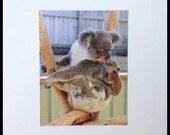 Koala Mother and Joey Photograph Postcard