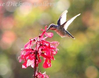 Hummingbird on Flower Fine Art Digital Nature Photography