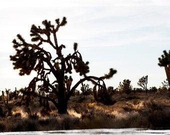 Art,Photography,Joshua Tree - Fine Art Photograph, Arizona, Nature, Cactus, Desert, Americana, Mojave, Mohave, California,Yucca,Photo,Print