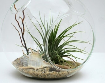 Air Plant Terrarium Kit, SPINY MUREX, Hanging or Sitting Glass Globe Terrarium Kit, Beach Terrarium for Mom, Mother's Day Gift