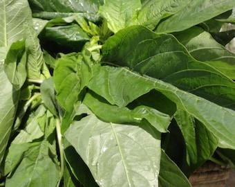 Jamaican CALLALOO SEEDS, (Amaranth) Real Jamaican Organic Heirloom Callaloo seeds harvested from My garden