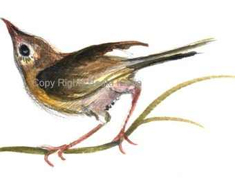 Art Print of Hand  Drawn Baby Bird.  Print of Drawing for Home or Office Decor.