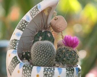 Cactus Desert Garden, Hanging Dish Garden