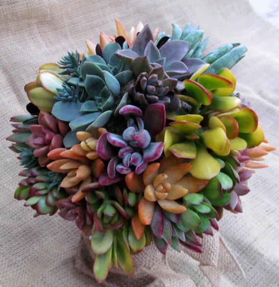 how to make succulents change colour