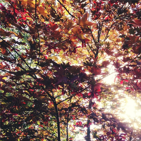 Autumn Leaves, Maple, Fall Leaves, Nature, Red Wall Art, Purple, Green, Sunlight, Light Leak, Leaves 5x5 Photo Print