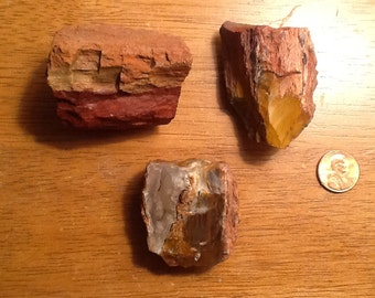 Petrified Wood Refrigerator Magnets Set of 3 ((7))