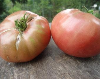 Carbon Purple Tomato 20 seeds *HEIRLOOM* Seeds of Life