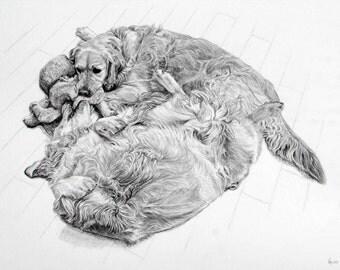 A3 graphite pencil commissioned portrait of your pet