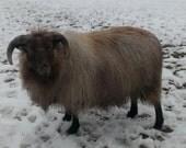 Icelandic Wool Roving, Medium Gray  4oz   Free Shipping