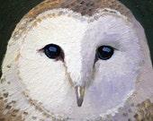 "Barn Owl an original 6"" x 6"" oil painting by Bruce Park"