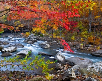 Nature Photography, Richland Creek Wilderness Area, Arkansas, Fall Color, Ozarks, Water, Dogwood, Red, Creek, Rocks