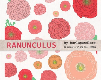 Hand draw clipart flower cliparts, ranunculus flower clipart, ranunculus flower clipart, coral red, red, rose, orange, wedding clipart