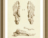 Skeleton Feet - Anatomy - Human - Vintage - Sepia - Brown - Art Print - SepiaMania