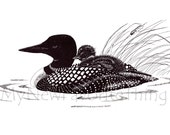 Print of original pen and ink illustration - Female Loon and Chick