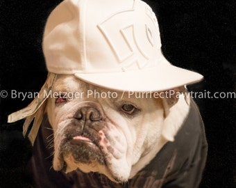 Thug Gangster English Bulldog Print, Fine Art Photography Print, Purrfect Pawtrait Pet Photography, Animal Photography
