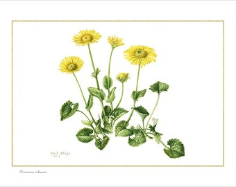 "Print ""Doronicum columnae""-series high-altitude Flora and Maria Rita's Lineage"