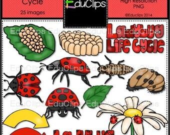 Ladybug Life Cycle Clip Art Bundle