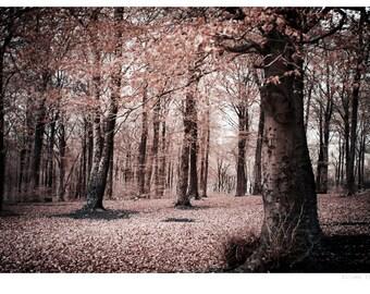 Autumn woodland infrared photograph, fine art photo print, landscape, nature, trees, England, UK